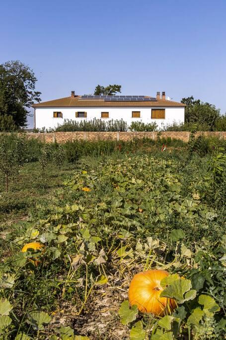 La casa es autosuficiente gracias a las placas solares y la energía eólica