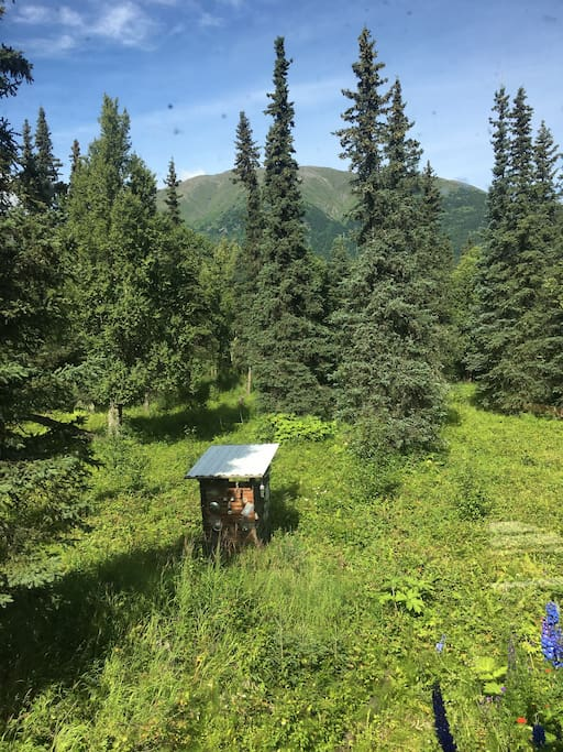 Summertime mountain views from the outhouse :)