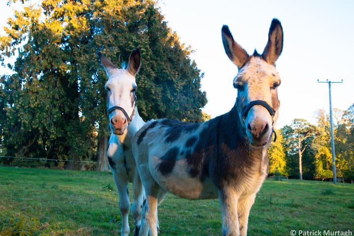 Bellingham Estate donkeys