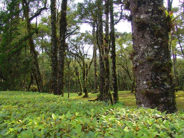Bosque em frente