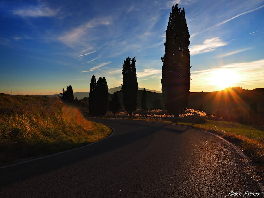 Cypress - Road - Nature