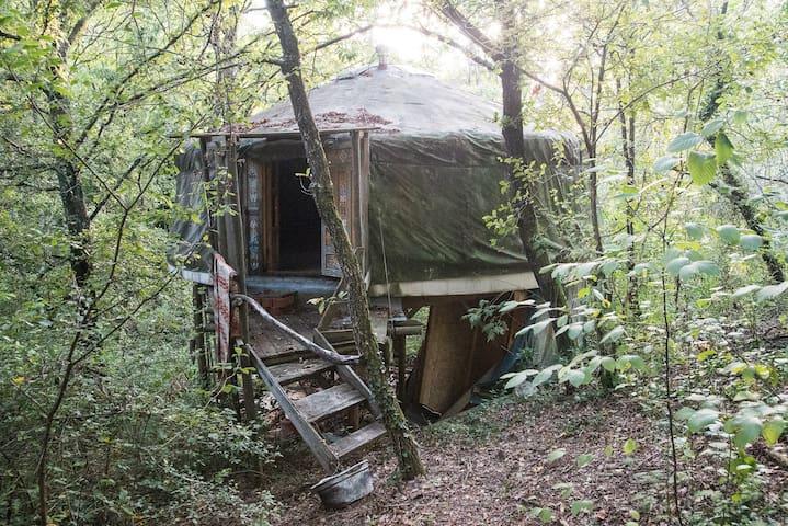 yurta nel bosco