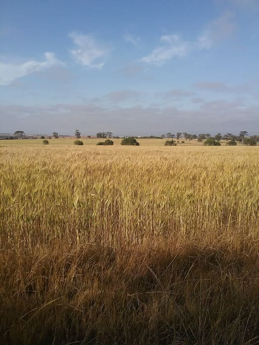 Local area is farming land with crops of wheat and cereals