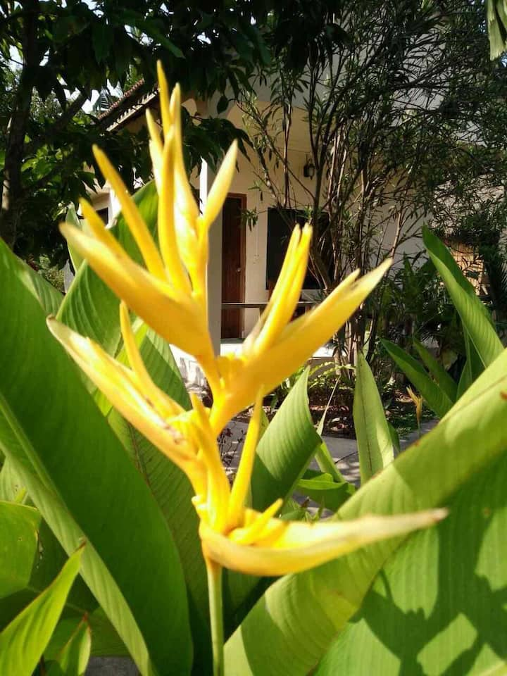 Bird of Paradise Bungalows