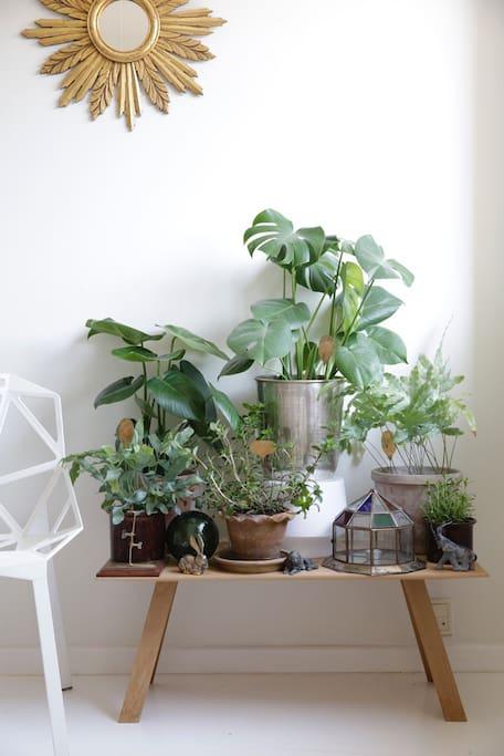 Many plants :)