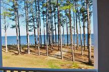 View of the Neuse River