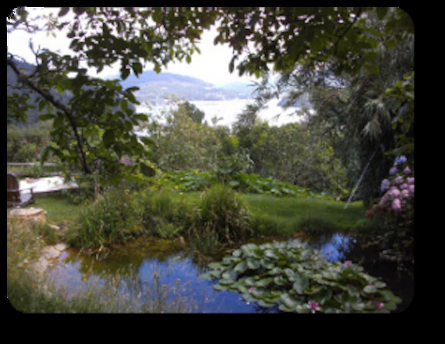 Der Garten mit Froschteich