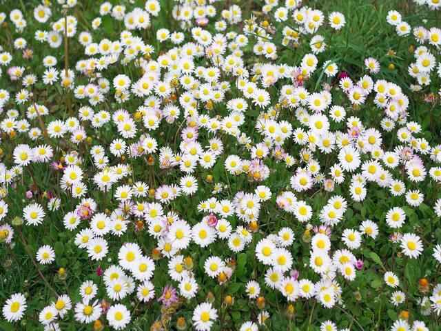 Ferienwohnungen Kolb, (Ravensburg), Ferienwohnung Gänseblümchen, 65qm, 1 Schlafraum, max. 3 Personen