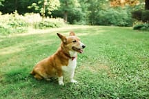 We are pet friendly! This is our corgi-mix, Lady.