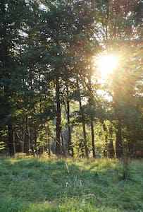 Entspannung pur in der Natur - Winterberg