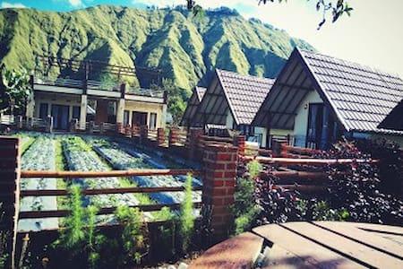 Mt Rinjani View