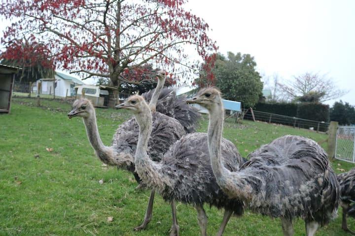 Waitomo Big Bird BB - Queen/Ensuite