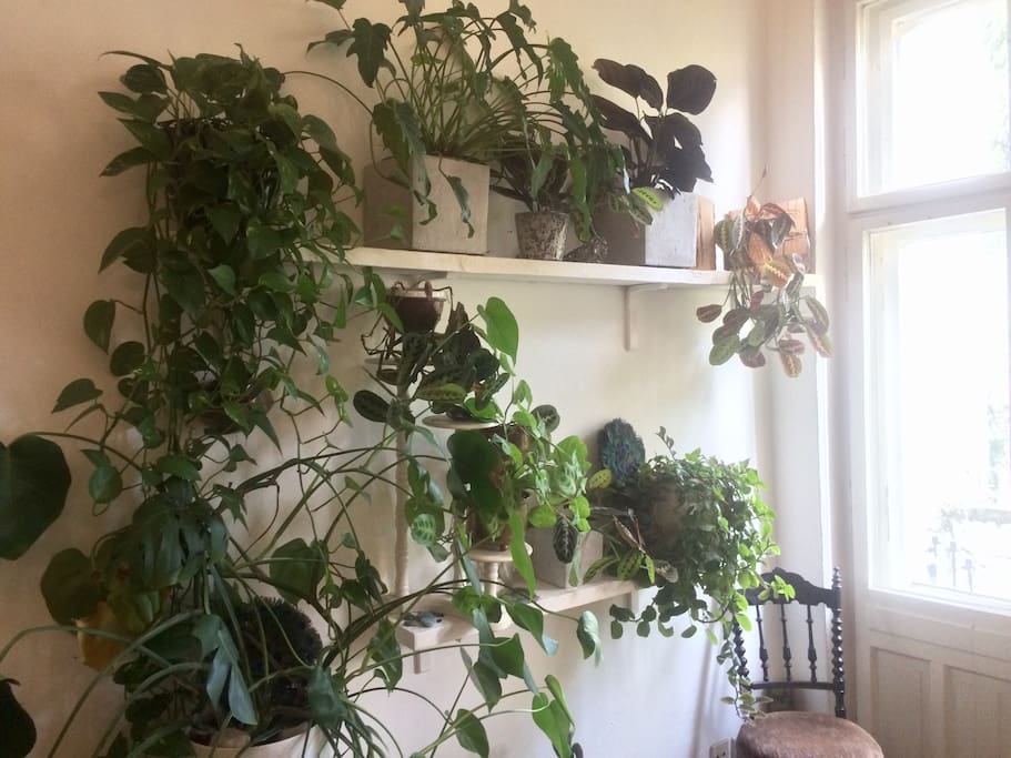 Plants' corner