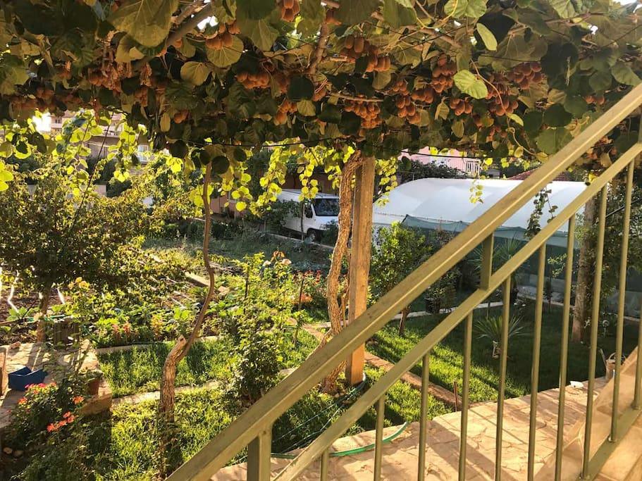 View on garden