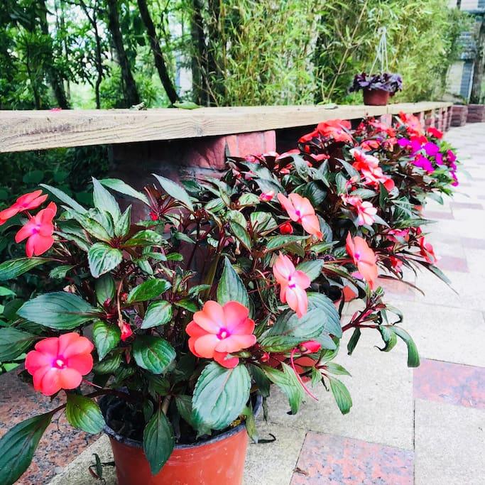 别墅花园中的鲜花