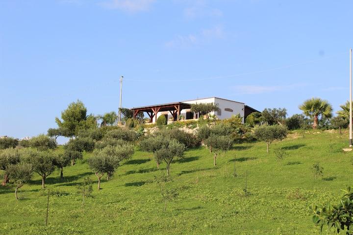 Welcome to the Sunny Villa Giulia!