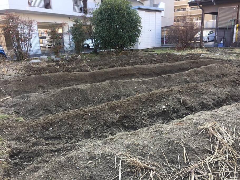 家庭菜園用の畝