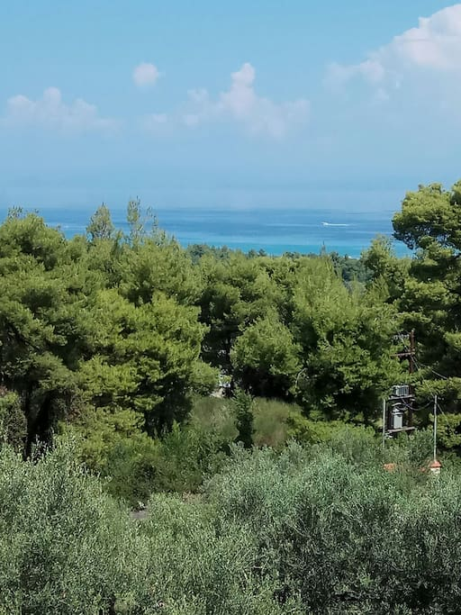 View at the sea and the pine forest