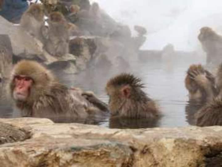 【Snow monkey area】Kaneki hotel