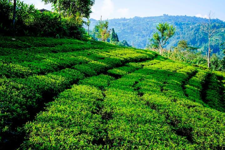 Tea Garden Farm Stay - Single Room