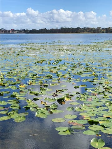 Lake with Lilly  Pads