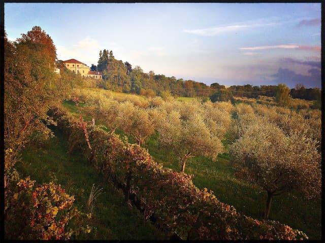 Villa Ines - Romano d'ezzelino  - Villa