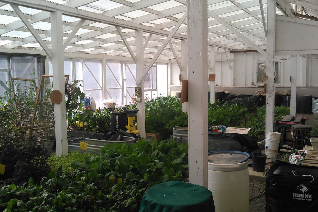 Picture of our greenhouse in Jan. 2017.
