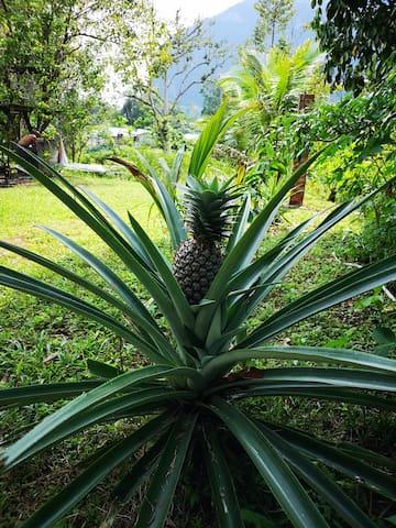 4 - Our garden
