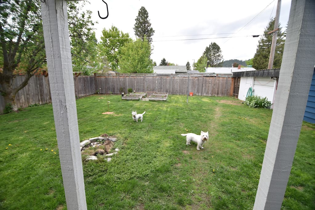 Backyard. The dogs will not be present when the home is booked.