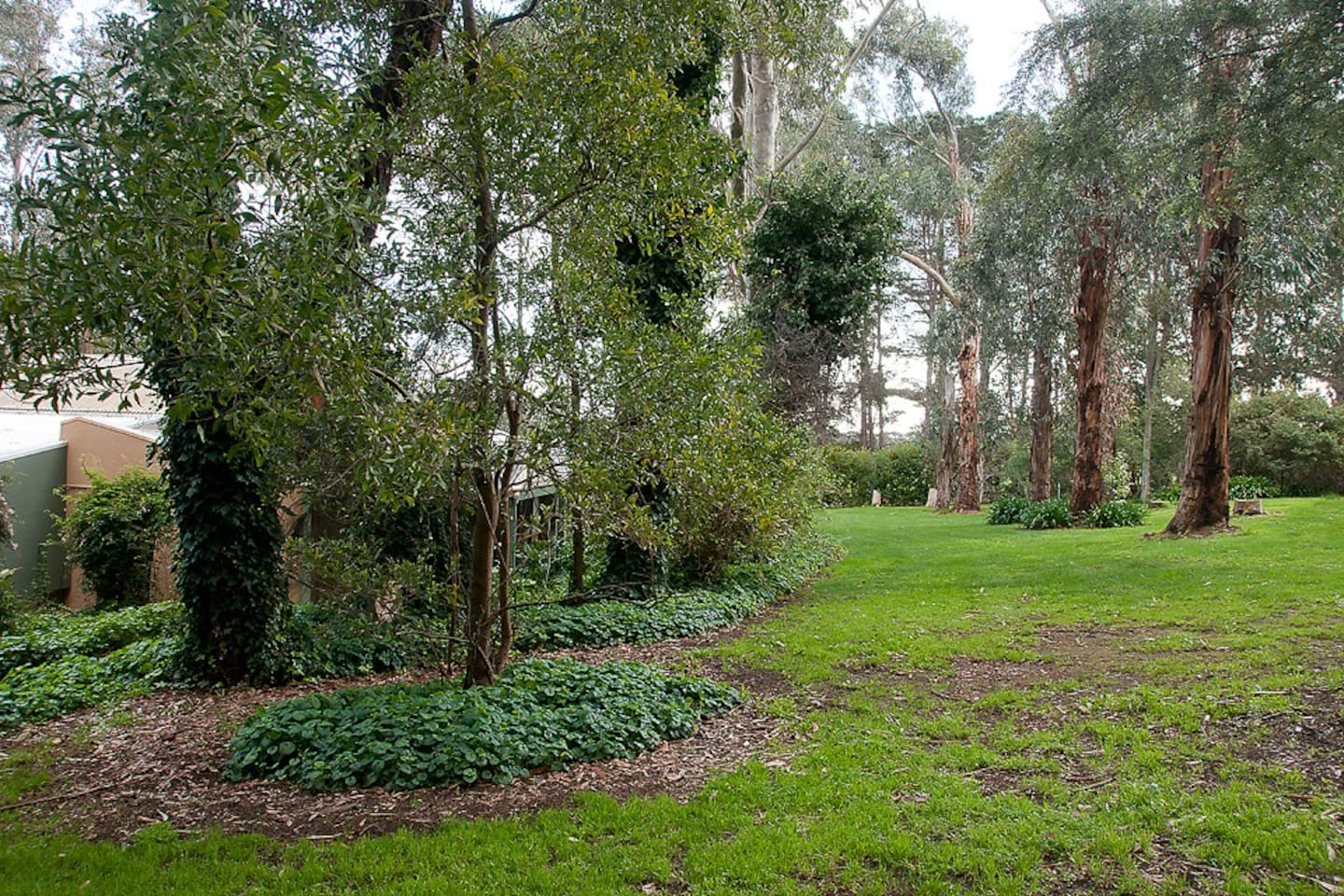 Large trees and garden