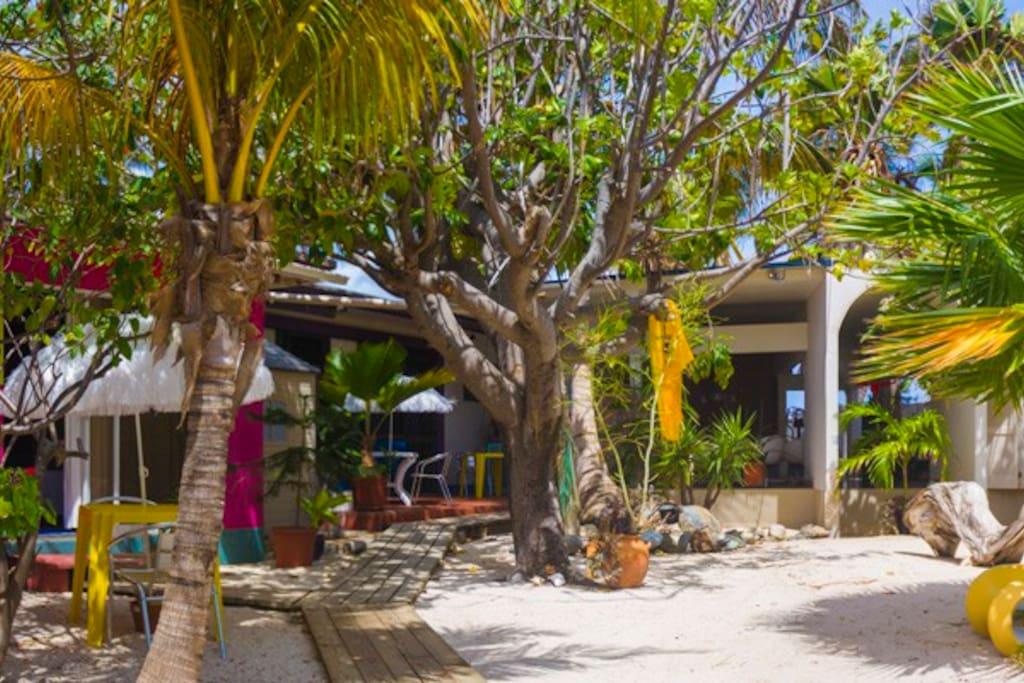the tropical back garden