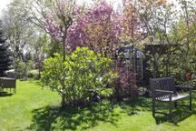 Mijn tuin staat prachtig in bloei.