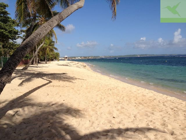 Apartment On the Beach - Max 4 Pers - Le Moule - Daire