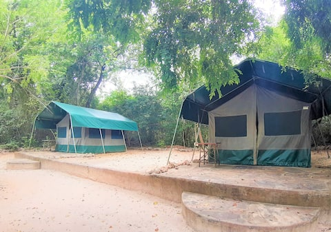 Forest Tent 1