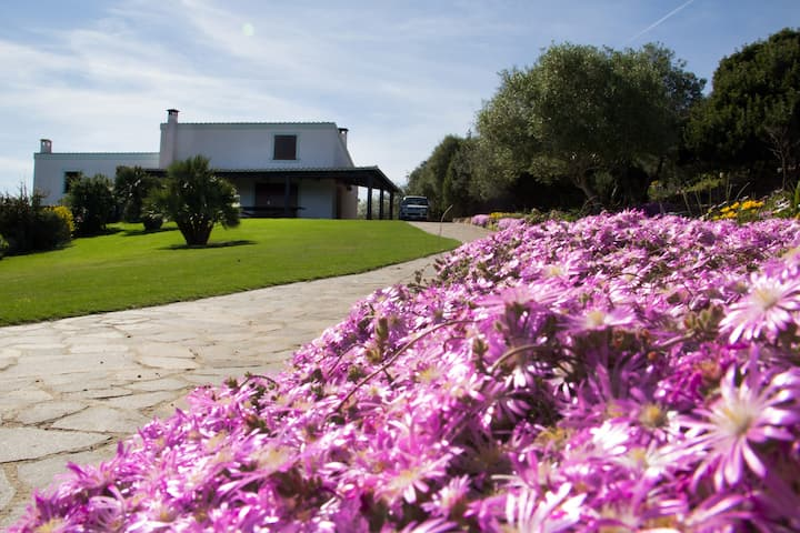 Villa Olga, vacanza in Relax e Comfort!