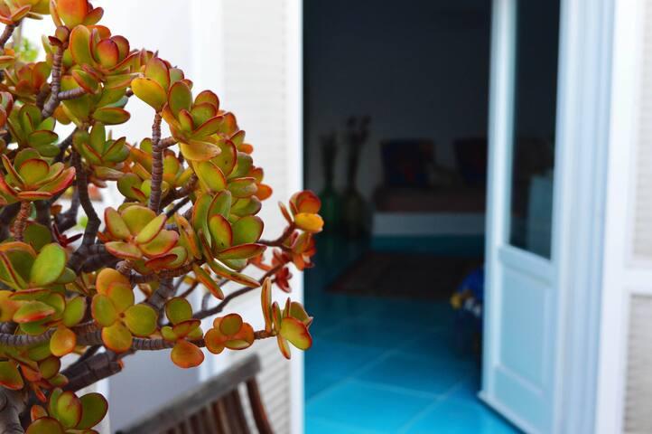 Il Sogno... in the Island. - Ponza - House
