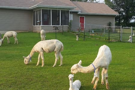 Experience an Alpaca farm! - House