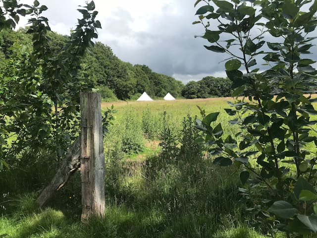 3 Gorgeous Bell Tents with campfire for 20 people