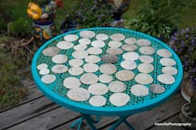 48 sand dollars!! Record breaking find in Neskowin, which is known for sand dollars. I'm a believer! ;-)