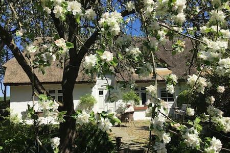 romantisches Reetdachhaus - Kluis