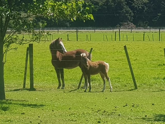 Welsh pony and miniature foal