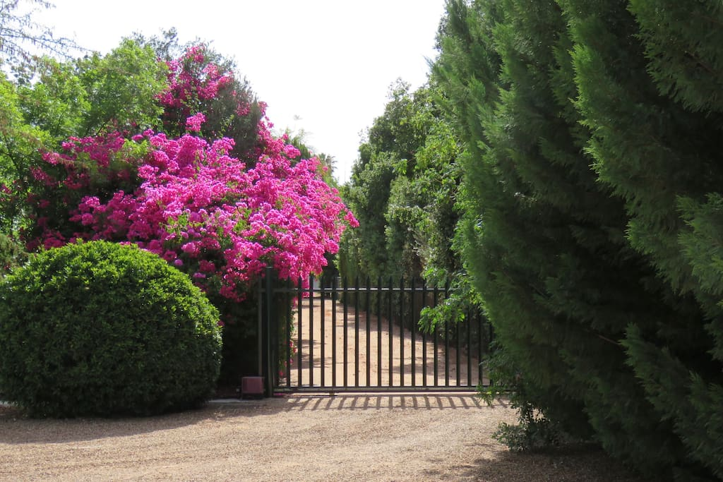 View of the Garden and entrance . Please note that We are in the middle of a drought in and around Cape Town, so the garden may look dry and less green.