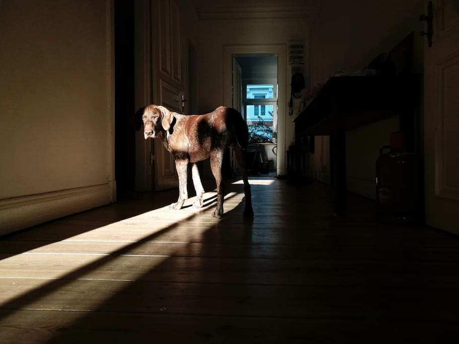 The hall / our dog / late evening light