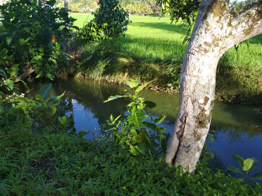 Behind the houses has a fishpool (1)