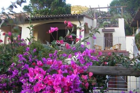 baia mare - Nisporto - 连栋住宅