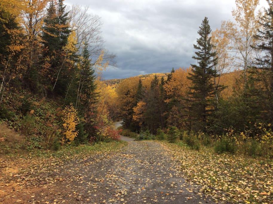 Nos magnifiques automnes