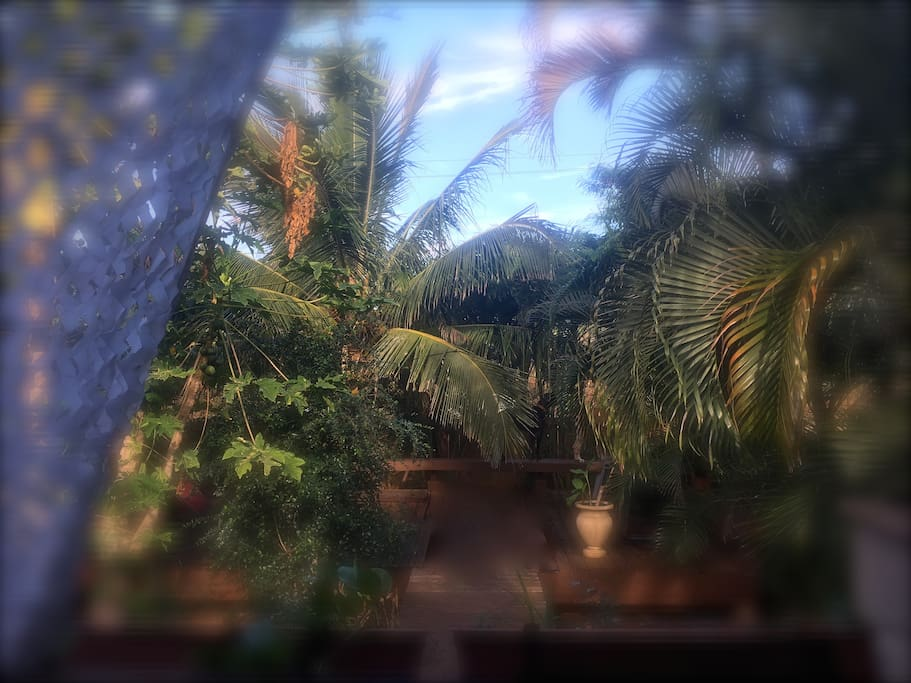 View from the front lanai facing velzyland surf break