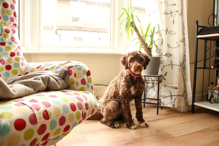 Spacious bedroom in a bright house with dog