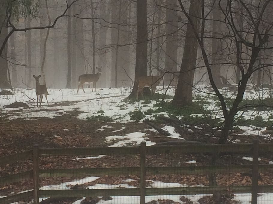 """My """"neighbors"""".  You'll see many deer, and this is a cool one from this past winter."""