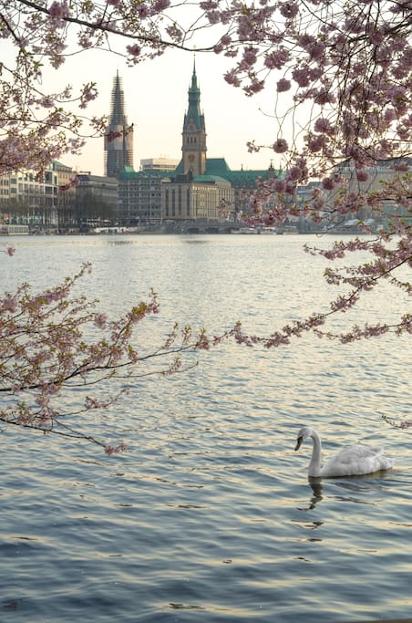 close to the Alster